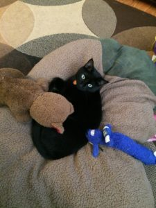 My prime suspect, Figaro, laying on the dog bed with a couple of his toys. She's nothing but trouble and enjoys batting small things around the house.  I could easily see her playing with thumbtacks...
