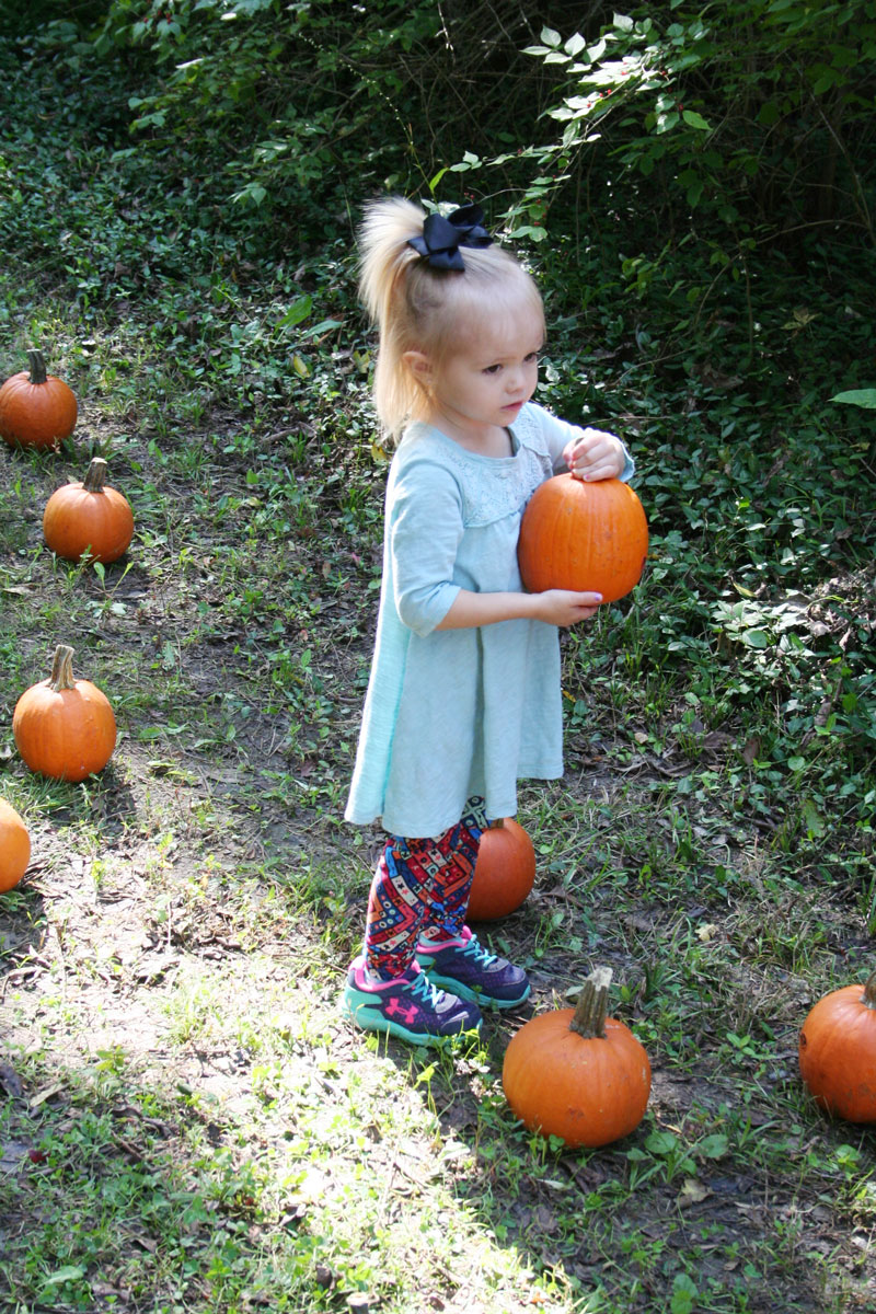 """Aubrey Doolittle picks a pumpkin from the """"pumpkin patch"""" set up by staff and parents.(Submitted Photo)"""