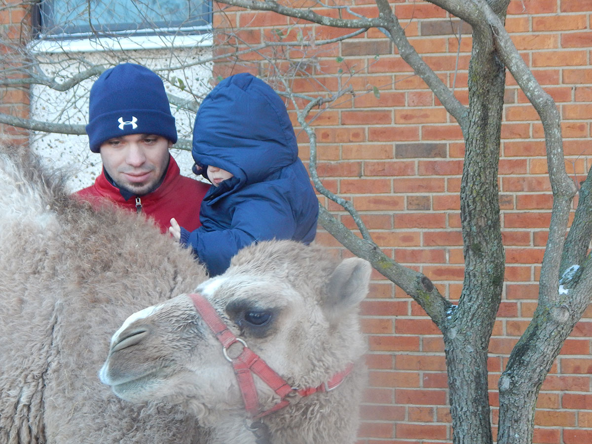 OFFUMC Youth Director Brad Lewis introduces the camel to his son, Landon.